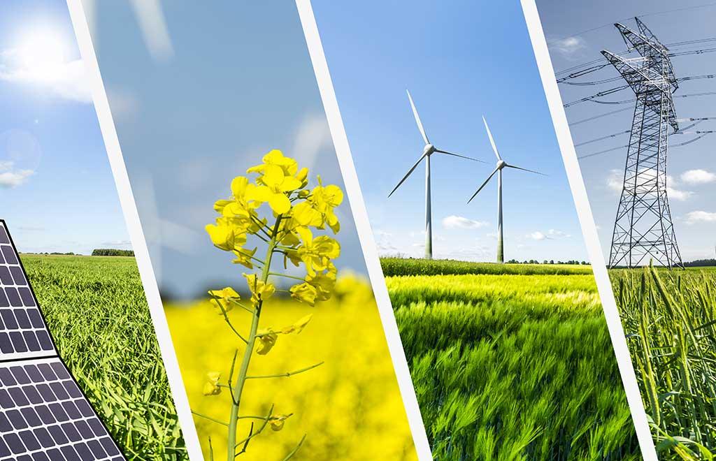 Feature - Renewable Energy